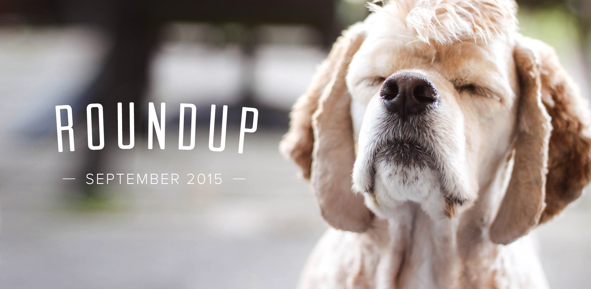 Pagekit Roundup September 2015